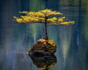 Resilienter Baum