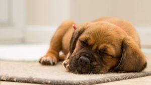 Schlaf gegen Stress